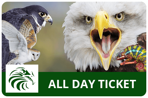 Liberty's Owl, Raptor & Reptile Centre Tickets